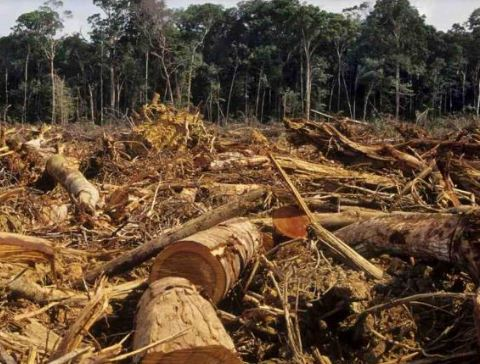 Numero record di ambientalisti uccisi nel 2020